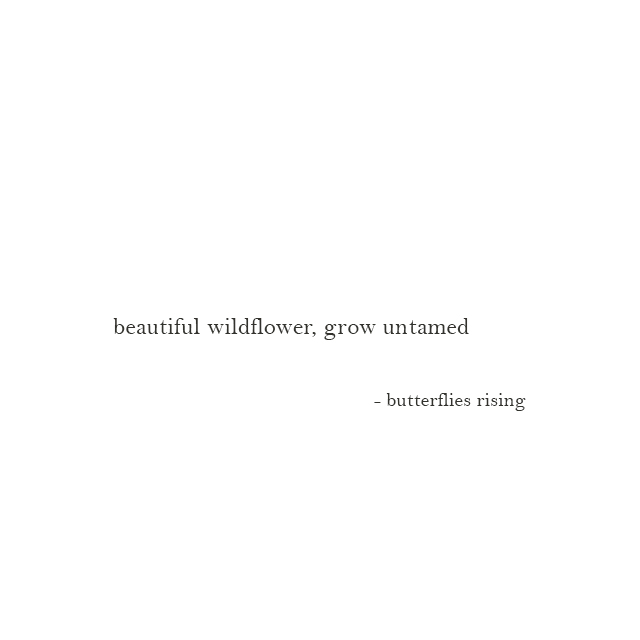 beautiful wildflower, grow untamed - butterflies rising