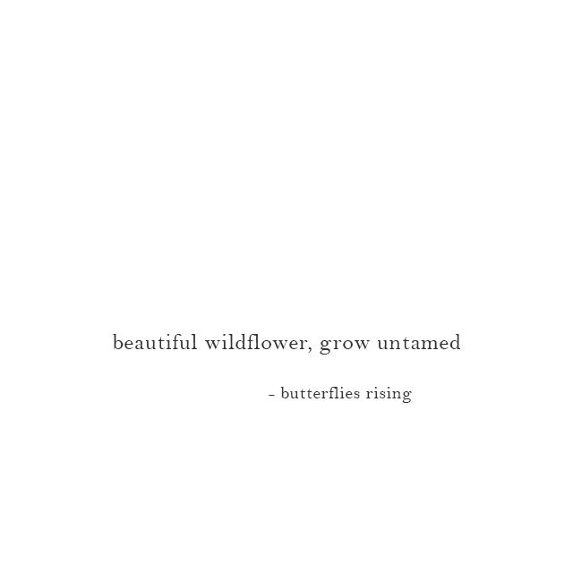 beautiful wildflower, grow untamed - butterflies rising