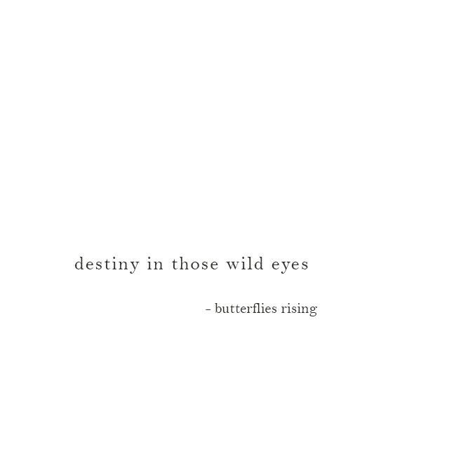 destiny in those wild eyes - butterflies rising